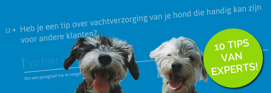 10 tips van experts over het trimmen van je hond